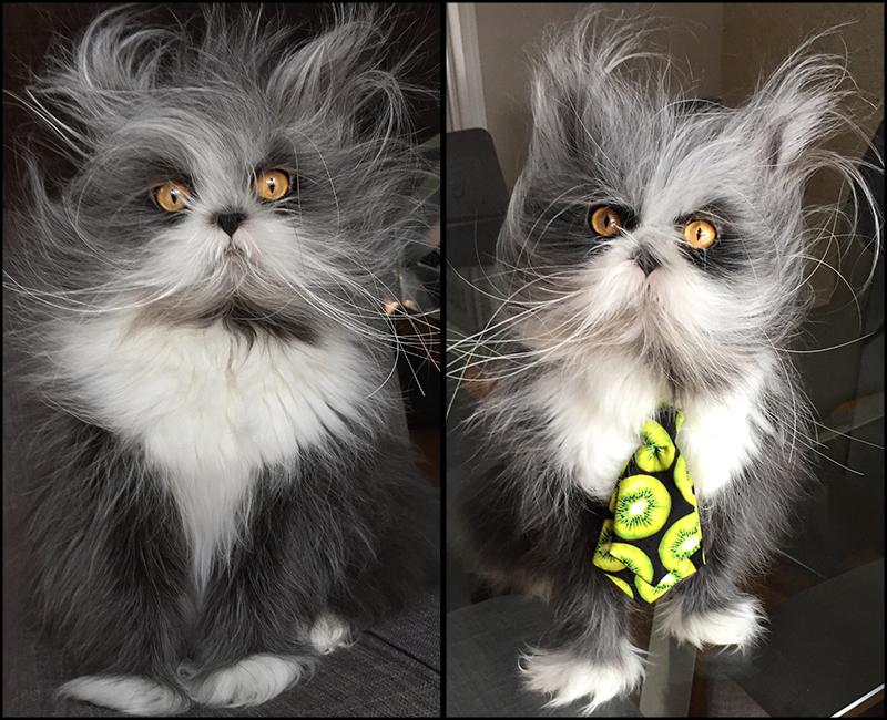 Portraits d'Atchoum le chat