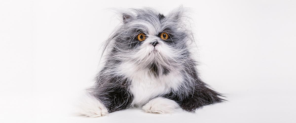Atchoum le chat